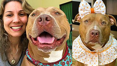 A pit bull Zara e a sua tutora juntas lutam contra o preconceito da raça.