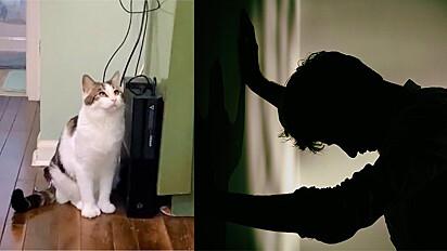 Gato desliga video game com a pata, no meio de jogo, e para para ver reação de dono.