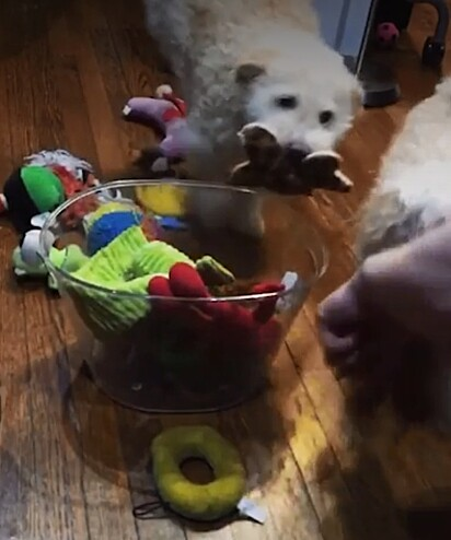 Um a um, a dupla guardou todos os brinquedos.