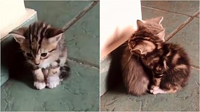 Gatinho se une a irmãozinho ao perceber que ele estava sozinho.