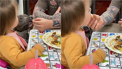 Bebê que não gostava de vegetais começa a comer após ver que seu cachorro pit bull gosta.