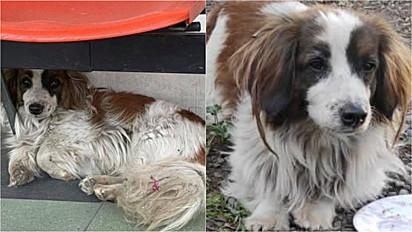 Sem saber que dono havia falecido, cachorro continha aguardando em frente a hospital na esperança que ele volte.