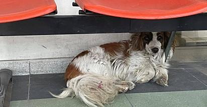 O cão acompanhou o seu dono até a porta do hospital.