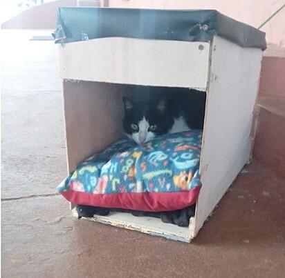 O projeto visa oferecer um abrigo para os animais de ruas se abrigarem.