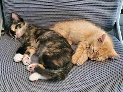 Agora a família está sob os cuidados do abrigo de animais.
