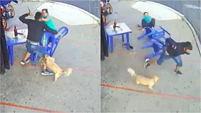 Câmera de segurança flagra cachorro protegendo a dona de assaltantes.