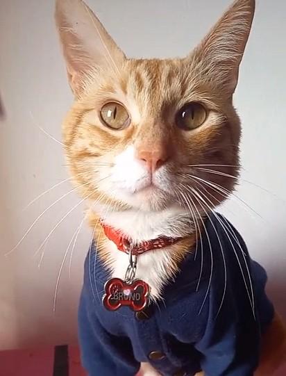 O gatinho Bruno.