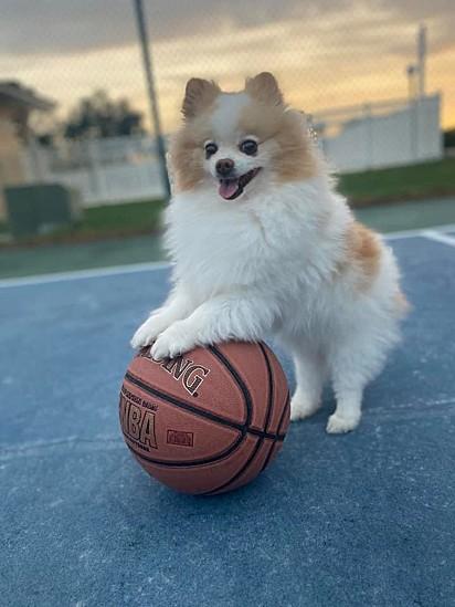 O cachorrinho Koda.