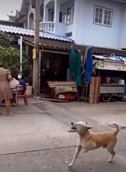 El cachorro ha aprendido a fingir que tiene una pata rota.