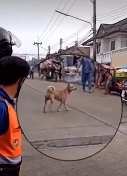 Metros después se ve al perro caminando con normalidad.
