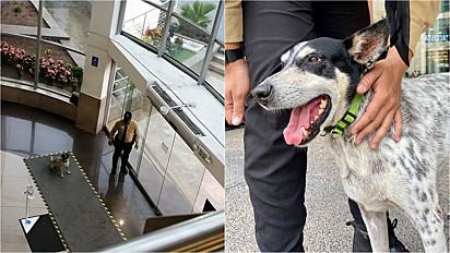 Segurança de shopping acolhe cachorrinho em dia de chuva nas instalações.