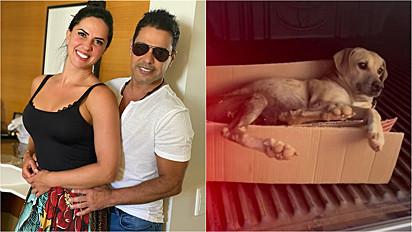 Zezé Di Camargo e Graciele Lacerda resgataram uma cachorrinha que encontraram na beira da estrada.