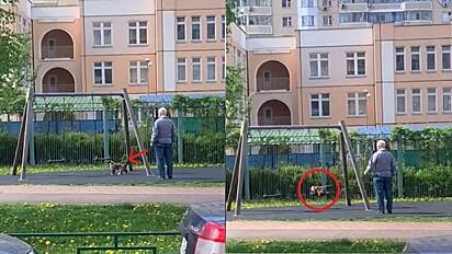 Idoso é visto passeando com o seu gato e o embalando no balanço.