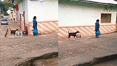 Cachorro é flagrado ajudando a dona ao carregar uma panela com a boca.