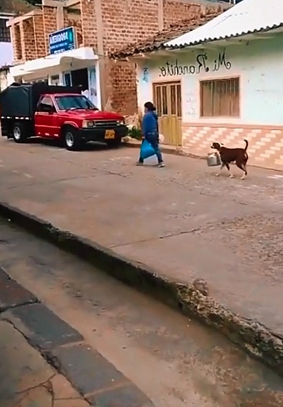 O cachorrinho percorreu as ruas da cidade ajudando a sua dona.