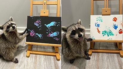 Guaxinis encantam internautas com pinturas em telas.