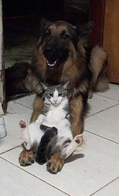 O cachorro Duque com a sua irmã felina.