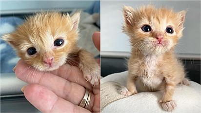 Gatinho abandonado pela mãe é resgatado e tem prosperado a cada dia.
