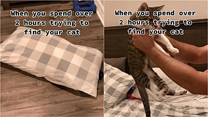 Gato faz família procurá-lo por mais de duas horas, enquanto isso, ele tirava uma soneca dentro do travesseiro.