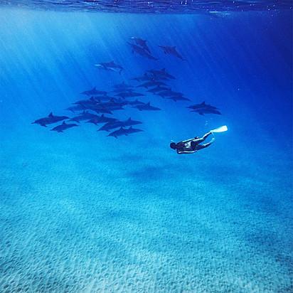 A mergulhadora já nadou com muitas espécies.