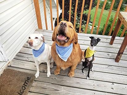 Sparky com os seus irmãos caninos.