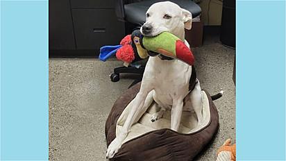 Cachorra adora presentear colegas de trabalho da tutora.