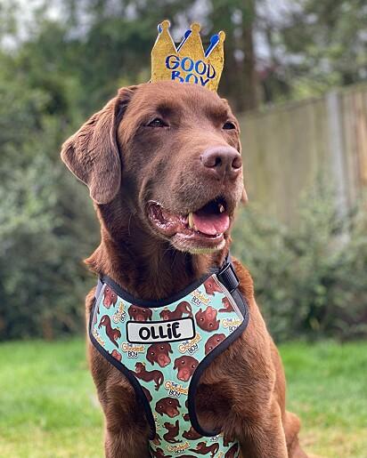 O cachorrinho Ollie.