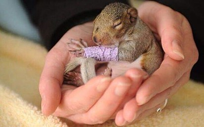 Um esquilo minúsculo.