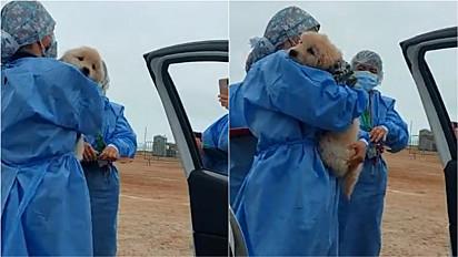 Mulher leva o seu cachorro junto até posto de vacinação e enfermeiras se encantam pelo mascotinho.