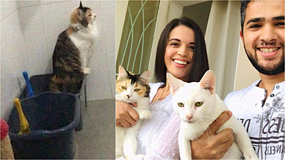 Tutores comemoram depois de sua gata com o intestino preso usar a caixinha.
