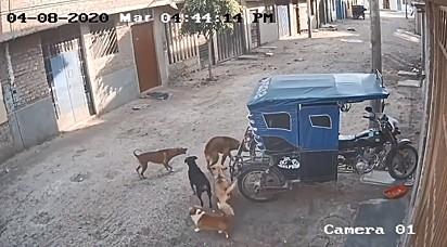 Uma turma de cachorrinhos entrou em ação para defender os amigos.