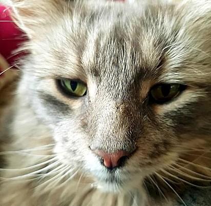 A família reencontrou o gatinho depois de 12 anos.