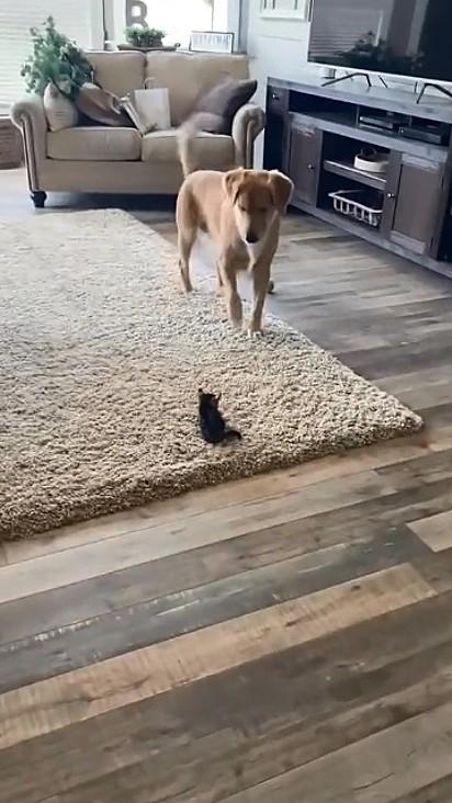Lucy fica encantada com a felina.