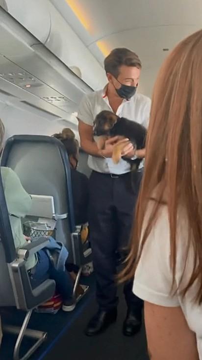 O comissário para acalmar os passageiros contou com a ajuda de filhote de pastor alemão.