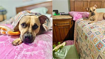 Cachorro faz o maior drama para avisar que seu jacaré caiu da cama.