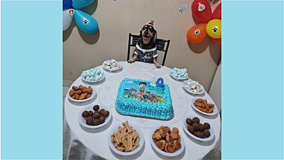 Família comemora em grande estilo o aniversário de 10 anos do seu dachshund.