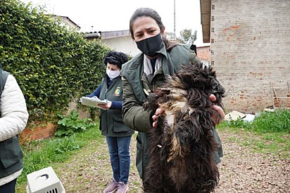 Cerca de 50 animais foram encontrados no canil.