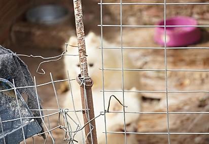Os animais foram encaminhados para clínicas conveniadas com o Município para receber os cuidados necessários.