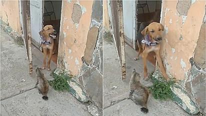 Gato não deixa irmão canino sair para a rua.