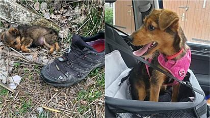 Homem resgata filhote abandonado em lixão na Sérvia.