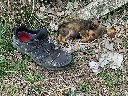 O cachorrinho foi encontrado ao lado de um par de sapato.