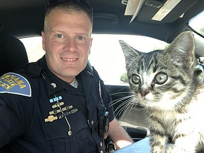 Os gatinhos foram adotados por um membro da instituição.