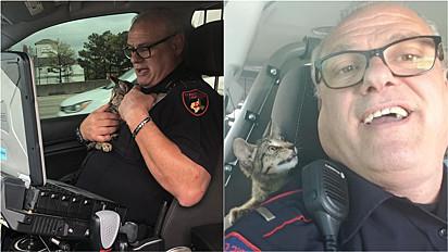 Motorista lança gatinho pela janela do carro e policial recebe chamado para salvá-lo