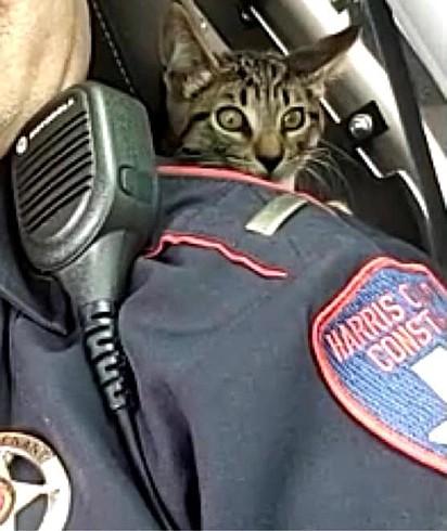 O gatinho foi lançado para rua pela janela do carro.