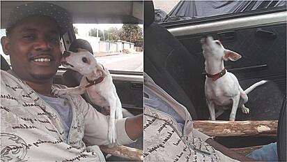 Cachorrinha fica em êxtase quando sai para passear de carro.