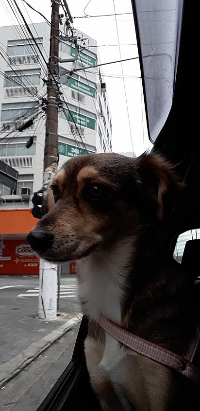 A cachorrinha Mel.