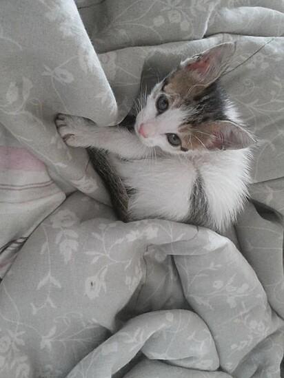 A gatinha foi salva de um triste fim.