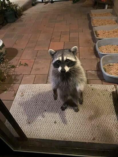 Eu chegando de madruga tendo que esperar minha mãe acordar às 7h da manhã para abrir a porta, porque eu esqueci a chave.