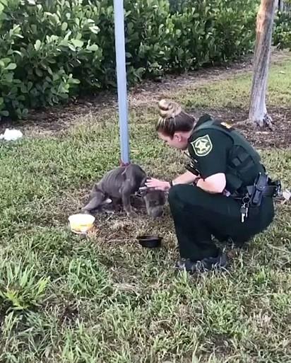 A oficial recebeu o chamado para resgatar dois cães abandonados.