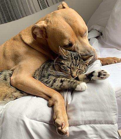 É muito amor envolvido!